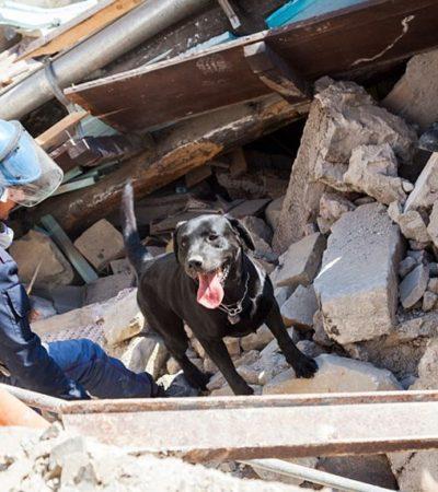 I cani delle Unità cinofile, veri eroi di questo terremoto