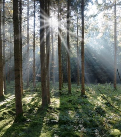Nella Val di Fiemme la foresta dei violini