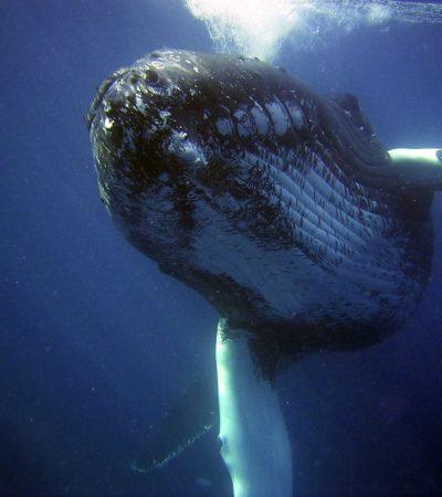 È l'uomo la causa della morte delle balene