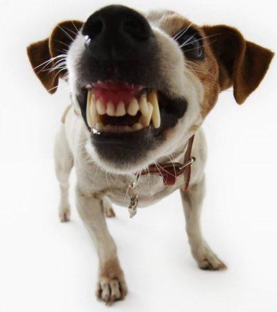 Ogni cane può essere aggressivo, ecco perchè