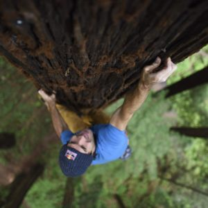 Chris Sharma in cima ad una sequoia
