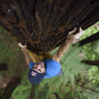 Chris Sharma in cima ad una sequoia