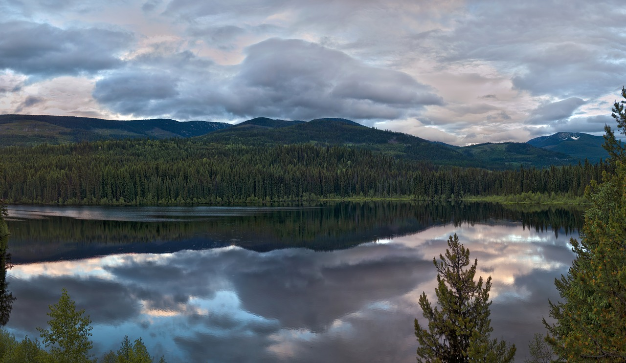 ecosistem landscape