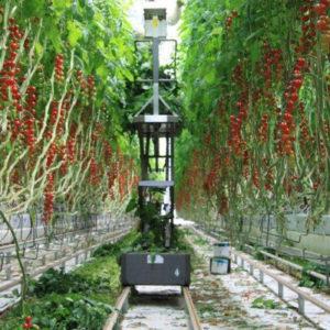 Berlino, fattorie verticali al supermercato