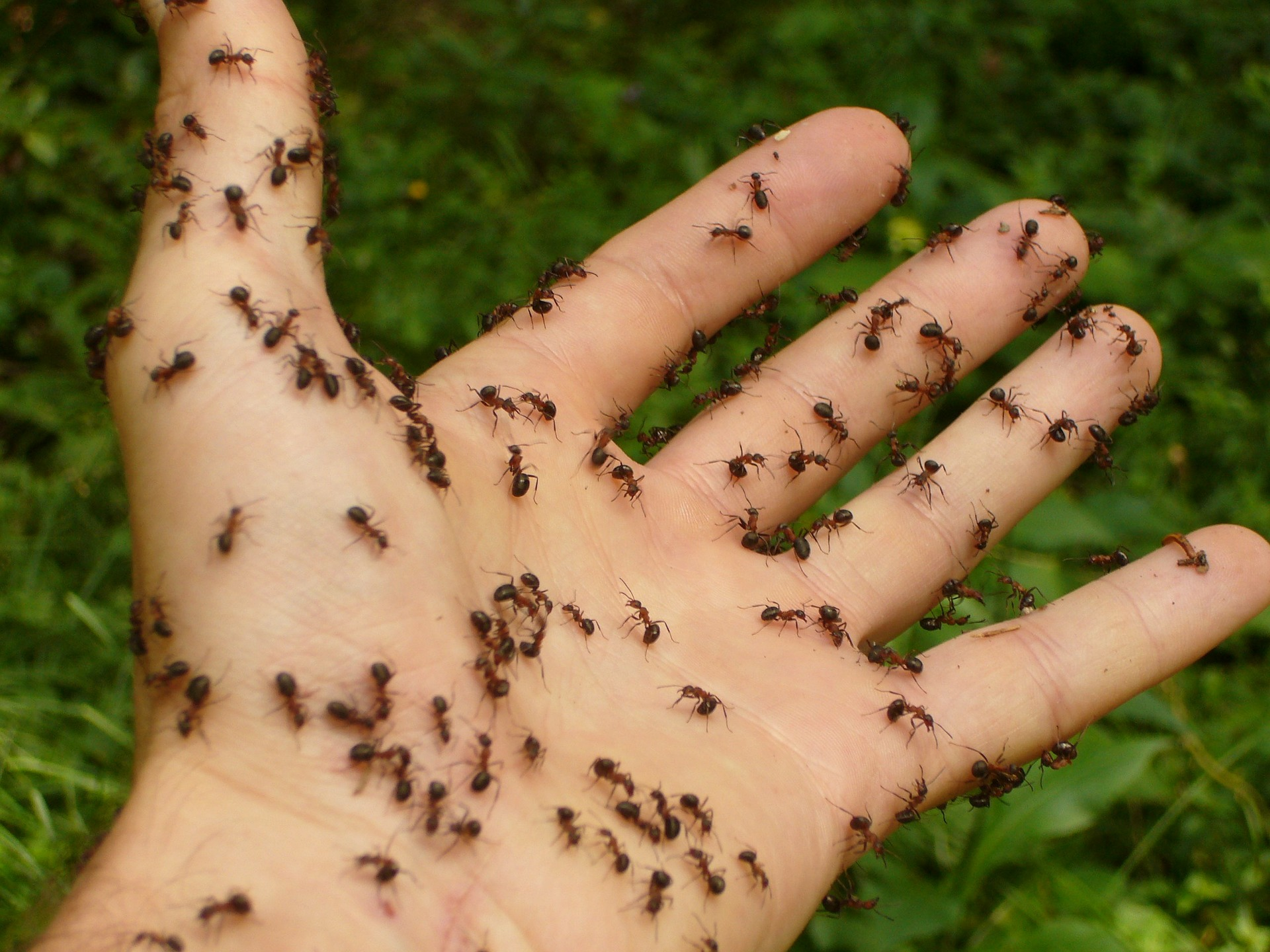 combattere le formiche
