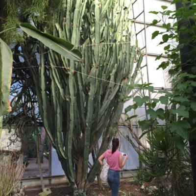 Giardini della Cutura, l'orto botanico paradiso del Salento