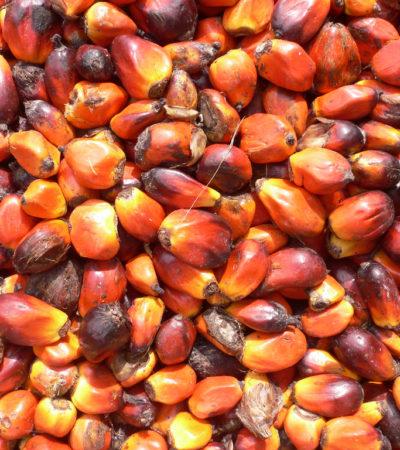 Olio di Palma sostenibile, un altro punto di vista