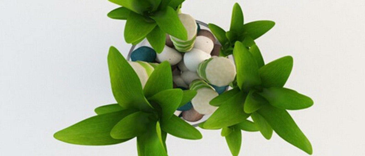 Tre piante che portano soldi amore e buona salute greenious for Piante ideali per camera da letto