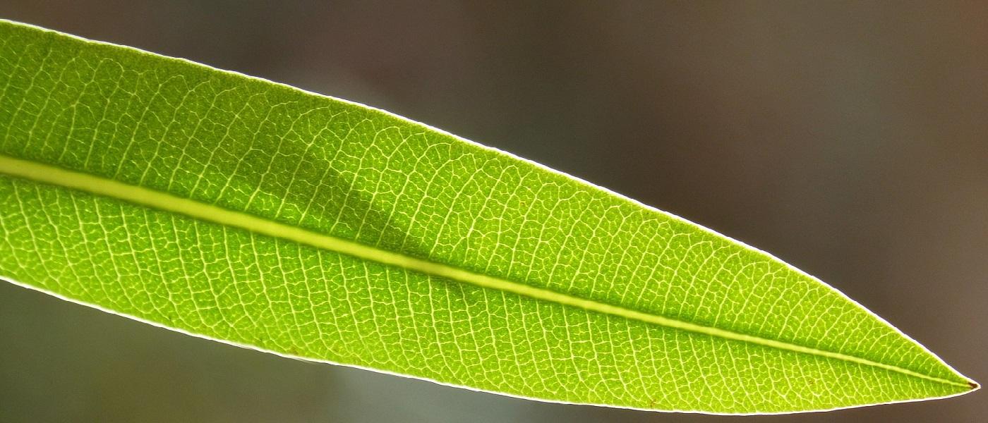 piante semplici da coltivare