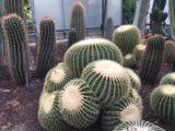 Giardino Botanico della Cutura Salento