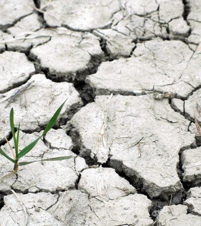 Sostenibilità e consumo alimentare. Scelte quotidiane per un futuro meno incerto