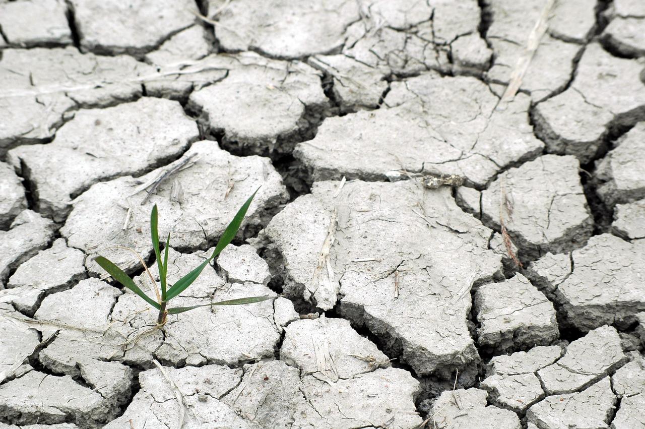 sostenibilità e consumo