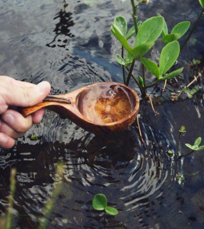C'è acqua e acqua: tutto quello che un pollice verde deve sapere