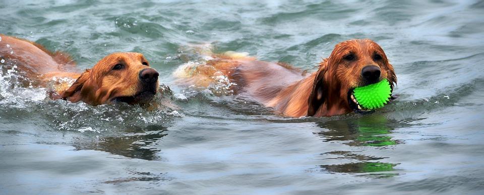 cani in acqua mare