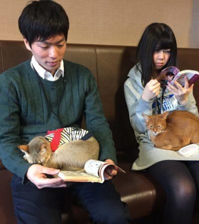 Perché i giapponesi amano i gatti?