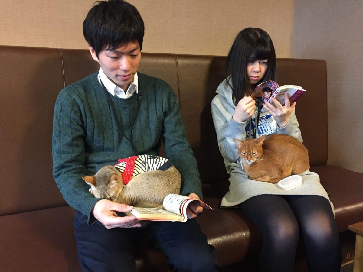 gatti e giappone cat cafe