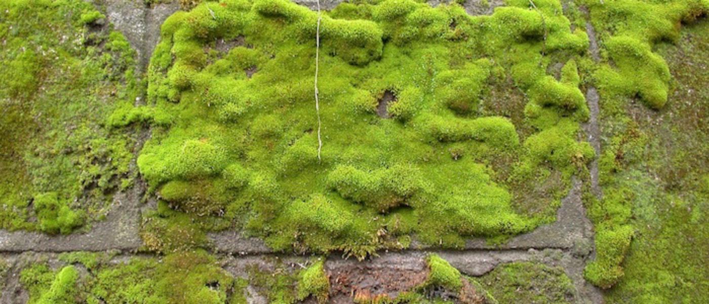sesto stupidario: le piante da tenere in camera da letto - greenious - Piante Da Camera Da Letto