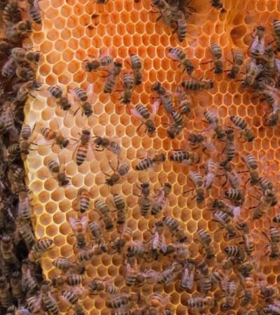 La scomparsa delle api: dal valore ambientale alle conseguenze per il pianeta