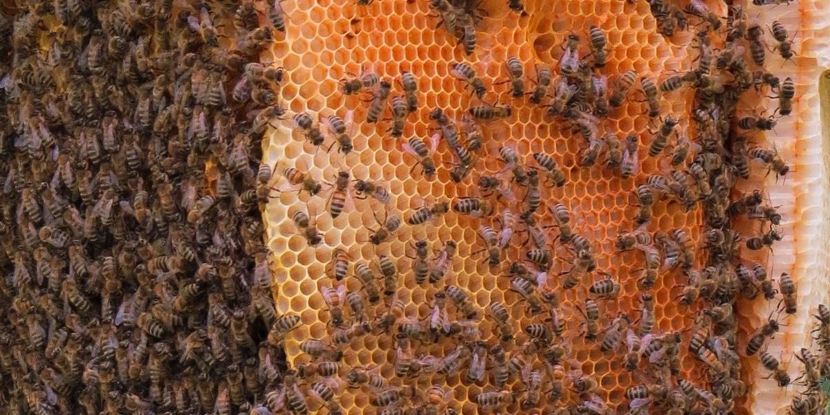 scomparsa delle api alveare