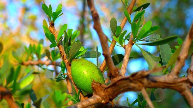 argon frutto su ramo
