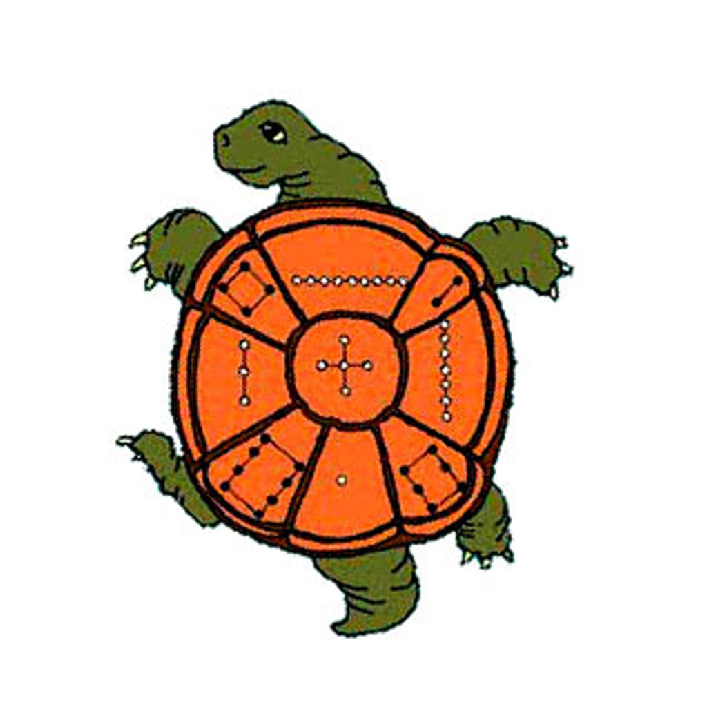 disegno tartaruga