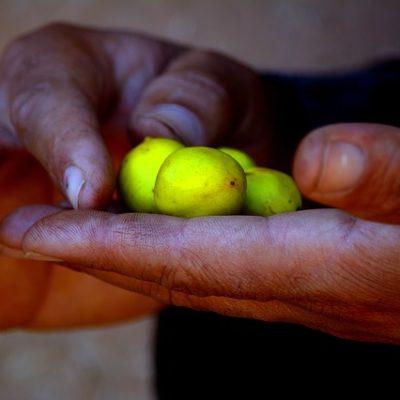 Olio di argan, tutto quello che bisogna sapere