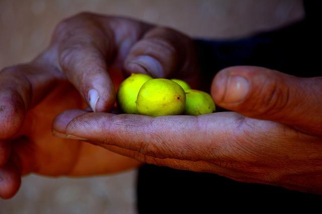 mani e argon, frutti per olio di argan