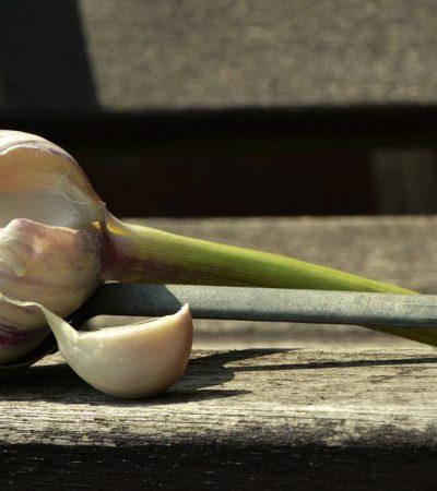 Aglio, tutte le virtù della pianta più usata al mondo