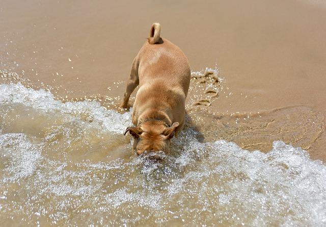 cane sulla sabbia