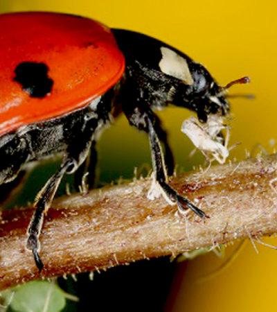Gli afidi: i rimedi naturali per eliminarli dalle piante