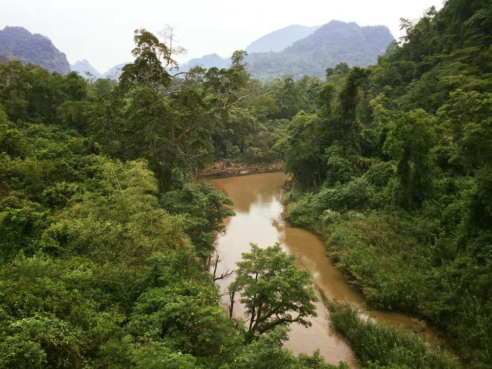 Vietnam fiume foresta