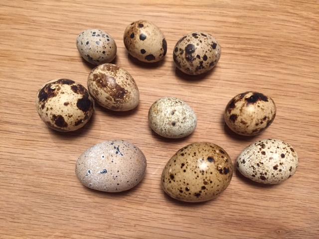 uova di quaglia su tavolo