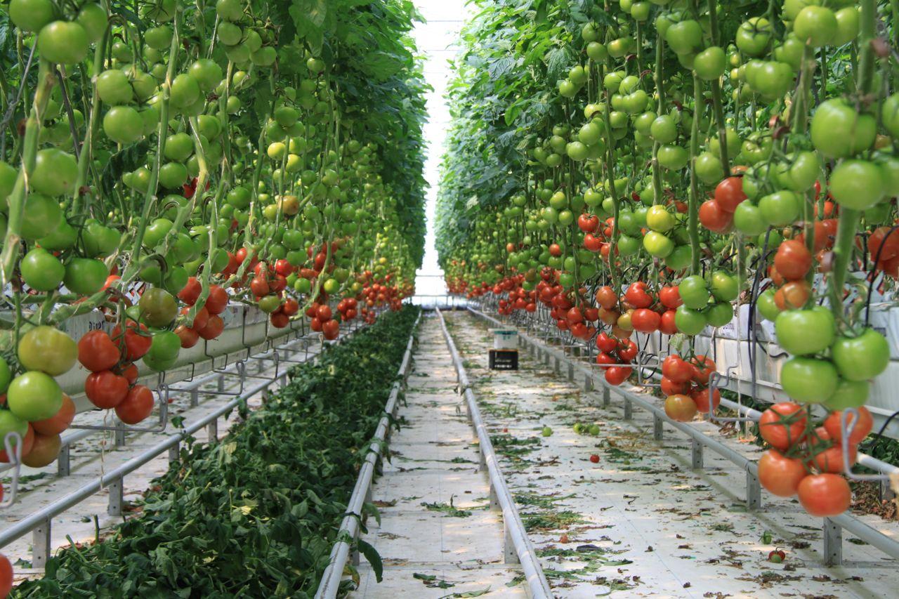 coltivare le piante con la tecnica aeroponica greenious