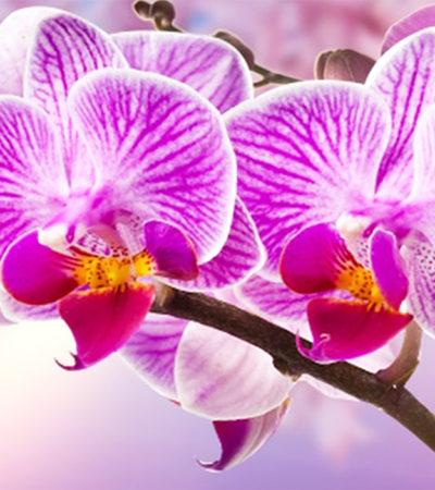 Il meraviglioso mondo delle orchidee