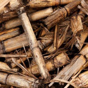 Energia da biomasse: trasformare gli scarti in energia