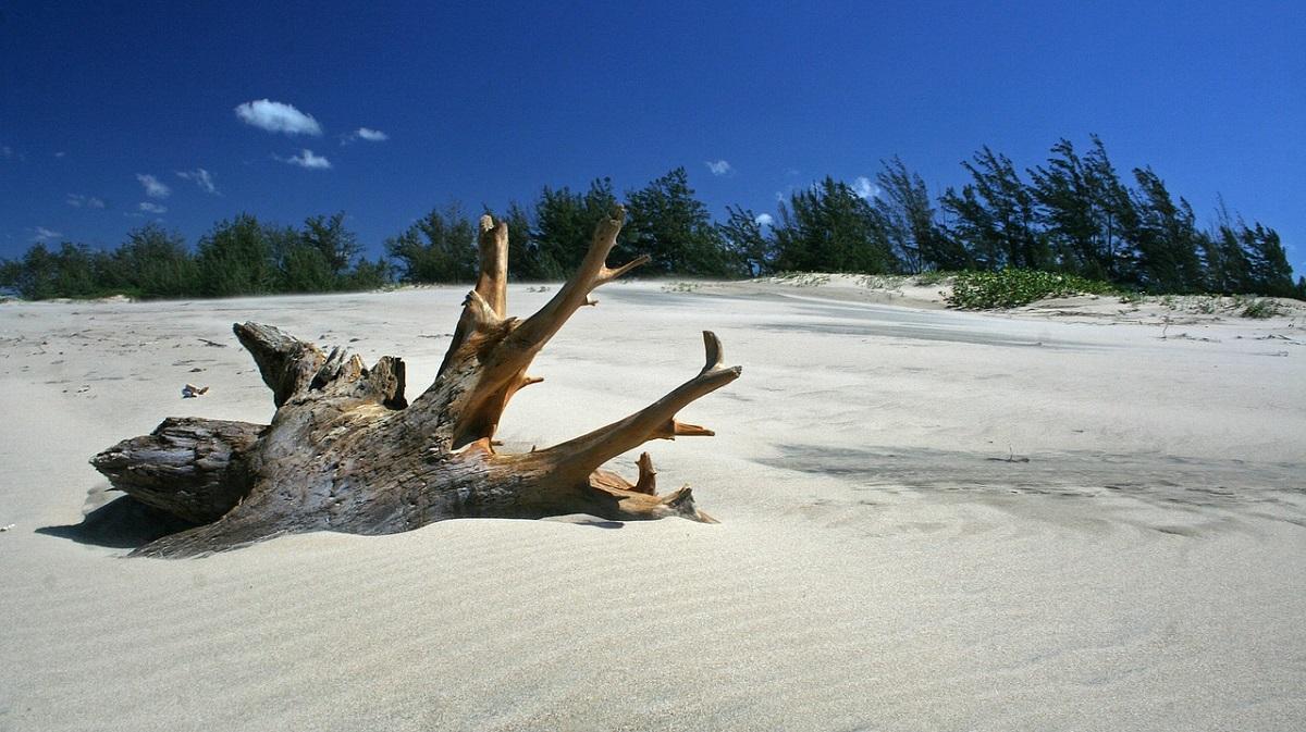 radice su spiaggia