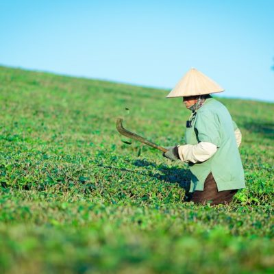 Principali tè verdi cinesi