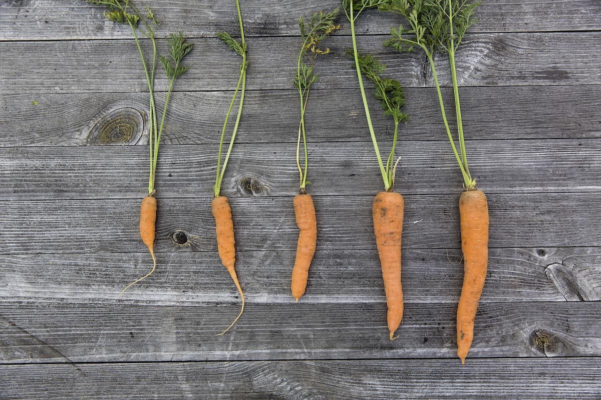 coltivare ortaggi in balcone