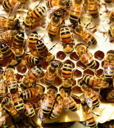 """""""I segreti dell'alveare Italia"""" un convegno per conoscere il miele"""