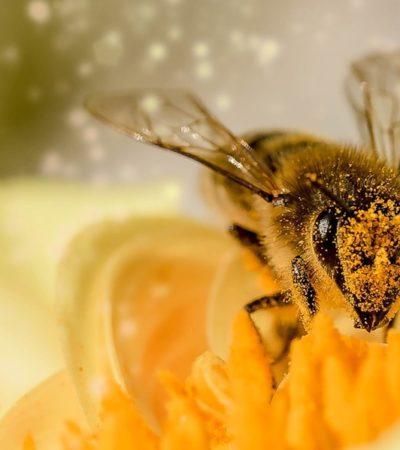 Senza api si salverà solo il cibo spazzatura
