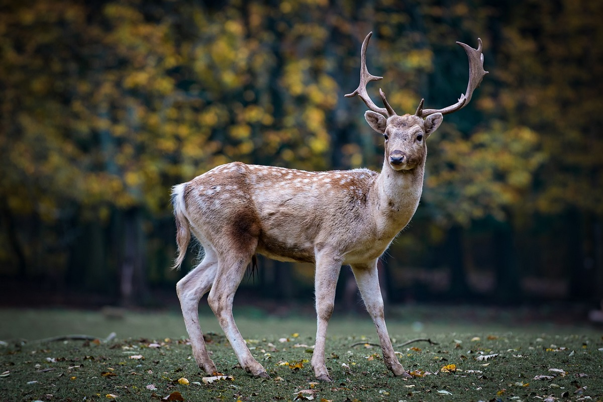 animali nella foresta