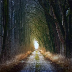 Progetto Foresmit per il recupero delle foreste