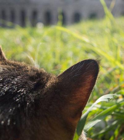 Gatti di Roma: il lato felino della Capitale