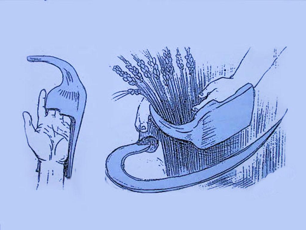 illustrazione di palamarka