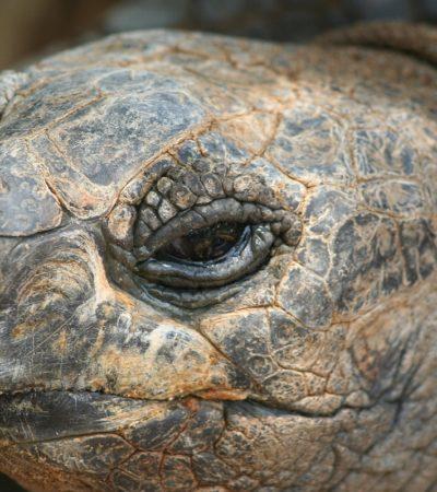 Anche le tartarughe hanno i loro francobolli, e in Italia?
