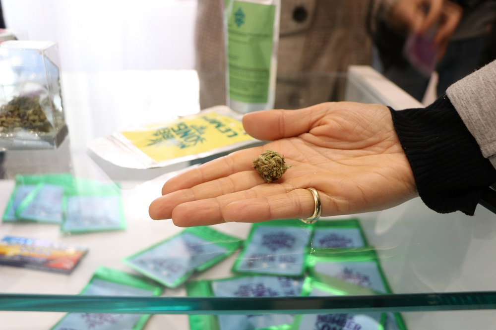vendita marijuana legale in italia