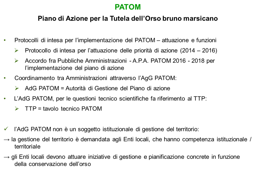 PATOM orso bruno marsicano