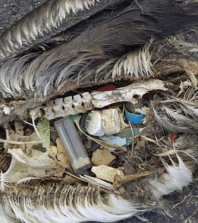Vivere senza plastica? Dieci piccolissimi passi per iniziare