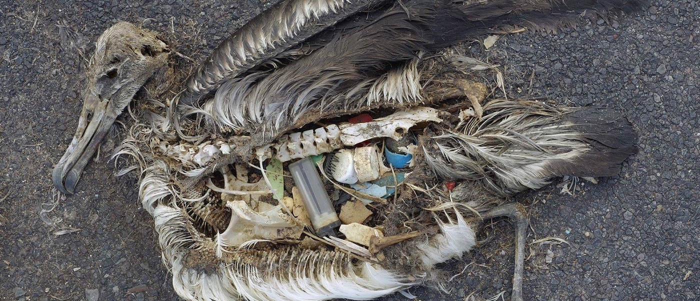 uccelli morti per la plastica