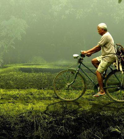 Miyazaki e il conflitto tra uomo e Natura